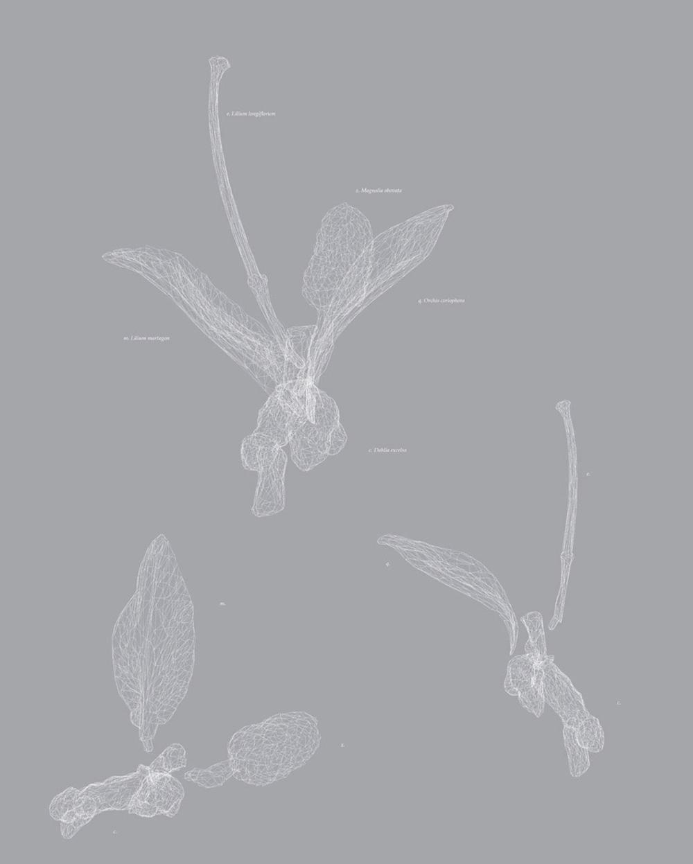 Carla Mattii, Type12, 2006, stampa su carta, cm 59x47