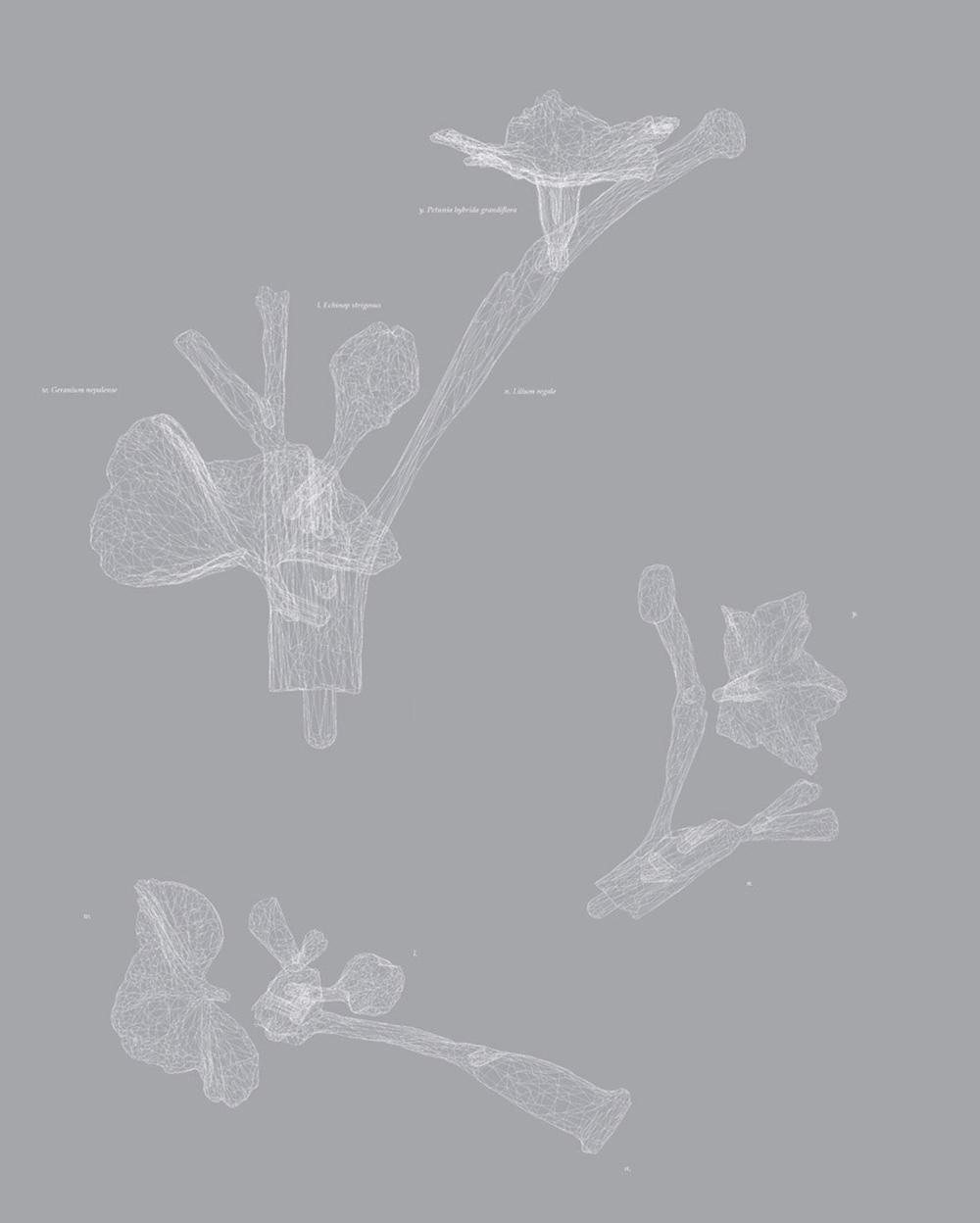 Carla Mattii, Type13, 2006, stampa su carta, cm 59x47