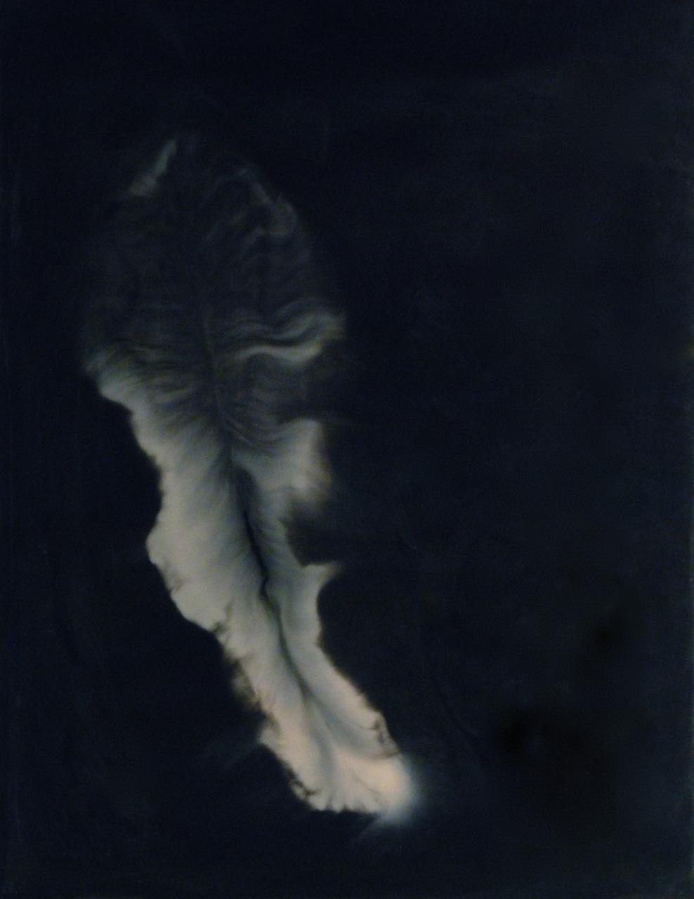Peter Flaccus, Feather, 2009, encausto su tavola, cm 61x47
